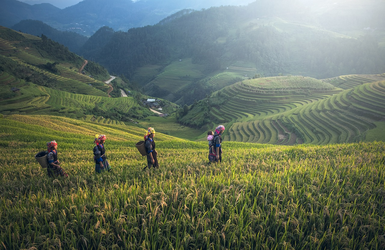 There Is Work in Japan for Experienced Expat Farmers